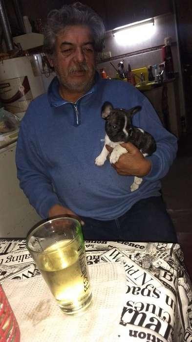 Bulldog Francés Ultimo Cachorro