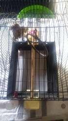Jaula de Aves O Canarios