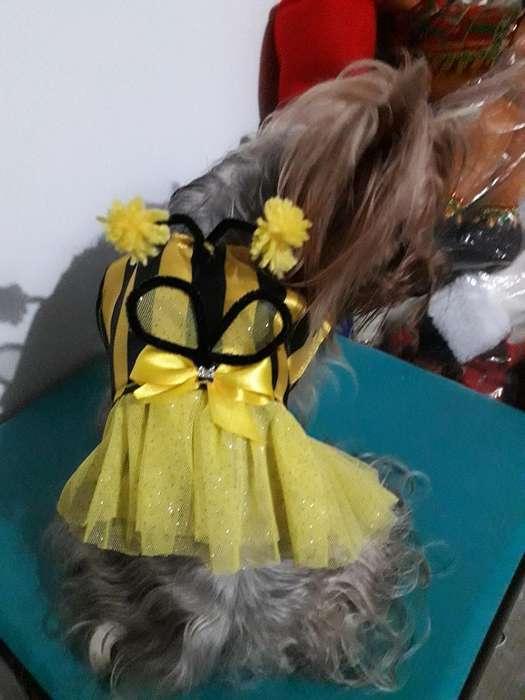 Hermosos Disfraces para Los Perros Y Gat