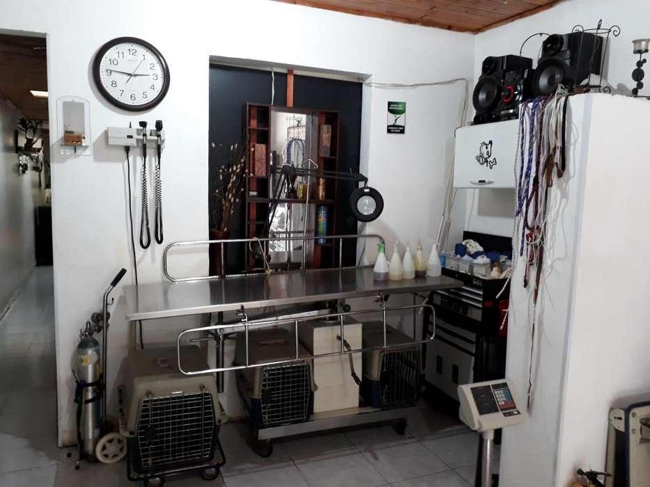 Veterinario, veterinaria, mascotas, perro, gato, ecografía