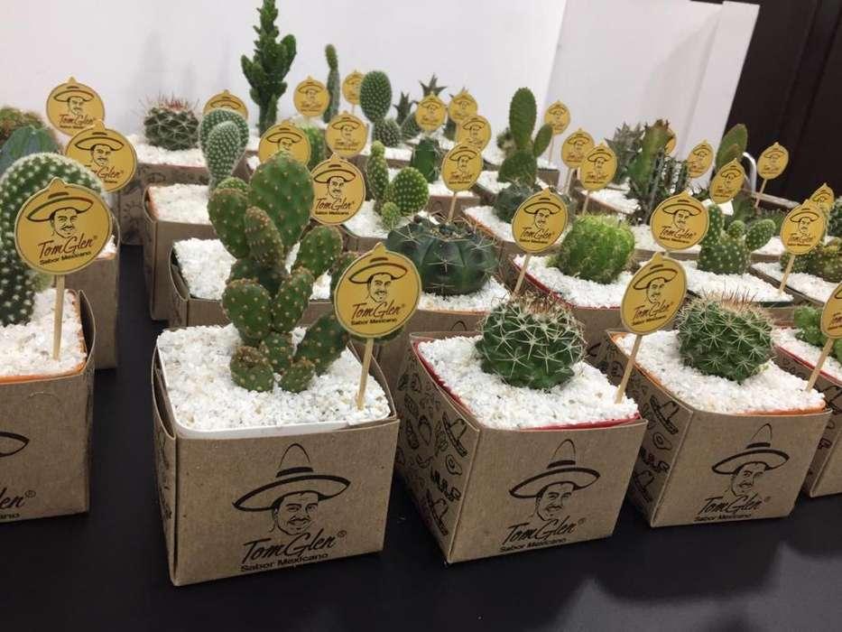 Recordatorios Cactus, Bambu, Suculentas