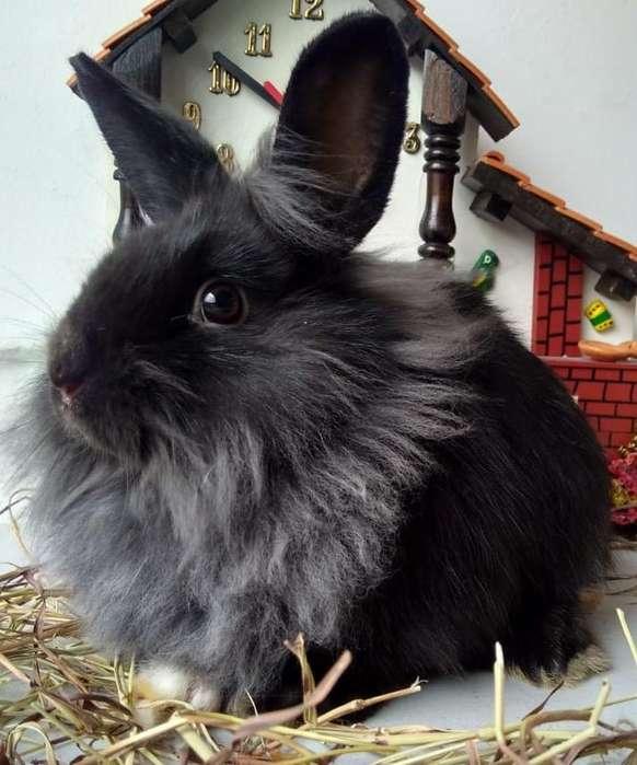 Mascotas Conejos Bogotá 3224499925