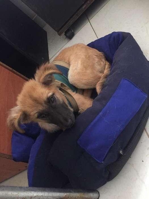 Adopcion Cachorra Criolla