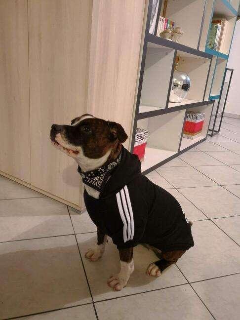 Ropa Poleras para Perro