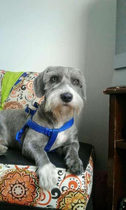 Quiero Novia para Mi <strong>perro</strong>