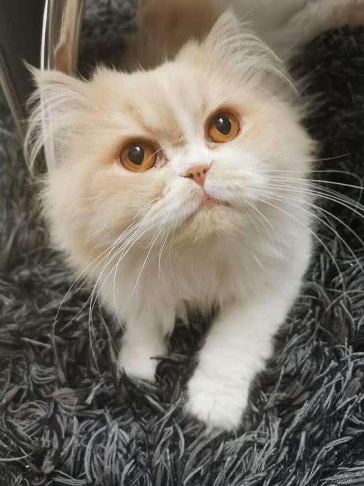 Gato busca gata me quedo con cra o salto 500000