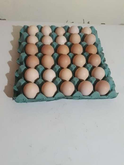 Venta de Huevos Fértiles de <strong>gallinas</strong>