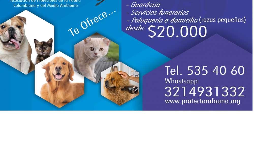CURSO PELUQUERIA PERROS 600.000