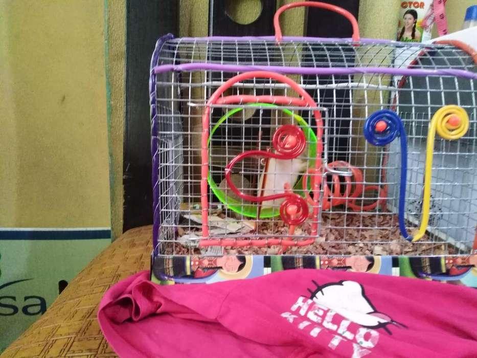 Pareja de <strong>hamster</strong> Mas La Jaula