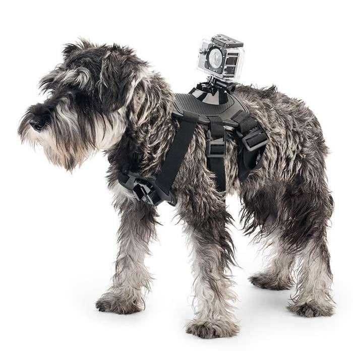 Pechera para <strong>perro</strong>s o Arnés GoPro