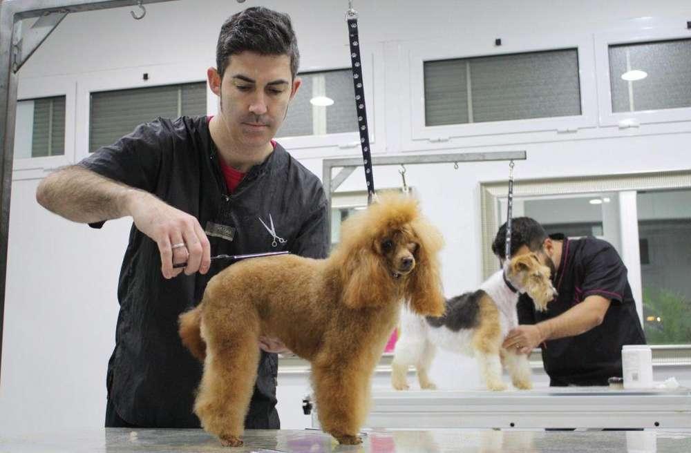 Peluquero canino con <strong>auxiliar</strong> e implementos -Estilista canino - groomer canino