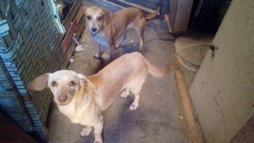 Cachorras de 6 Meses