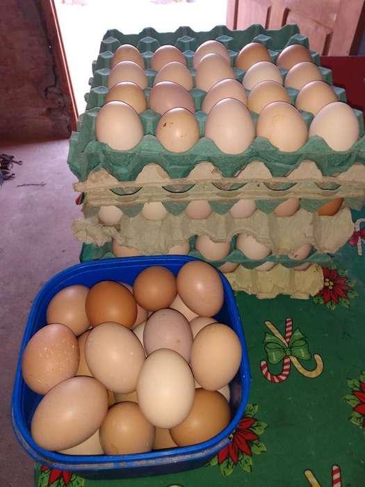 Maple Huevos Caseros de Campo