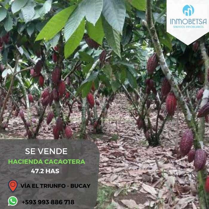 Hacienda cacaotera de venta vía Triunfo Bucay, porvincia del Guayas, sobre la carretera