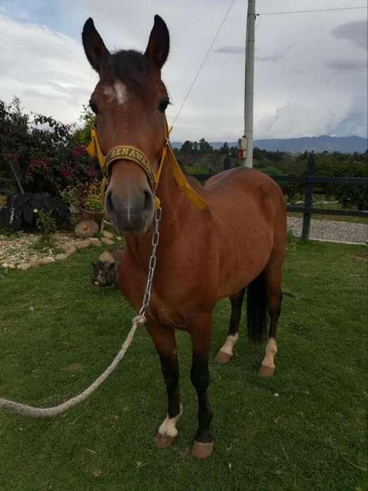 Se Alquila <strong>caballo</strong>s para Cabalgatas