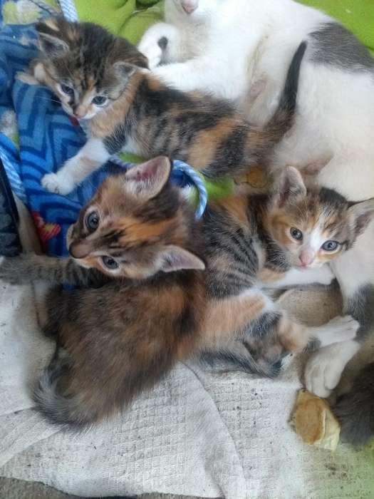 <strong>gatito</strong>s en Adopción