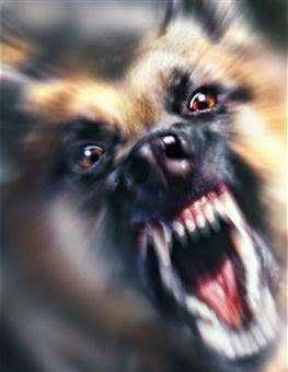 Resibo en Adopcion Perro Grande