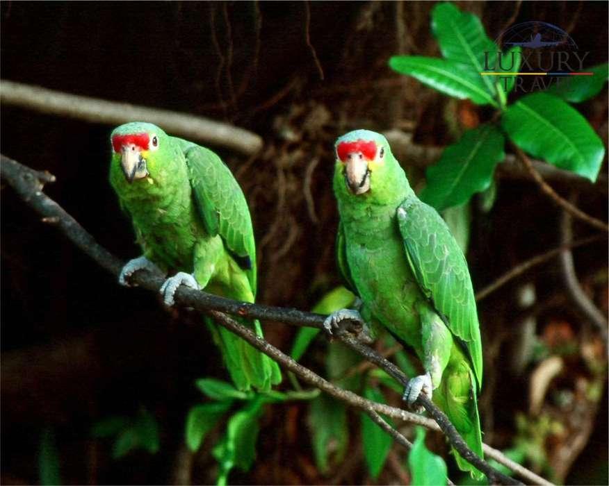 Amazonas increible y sorprendente
