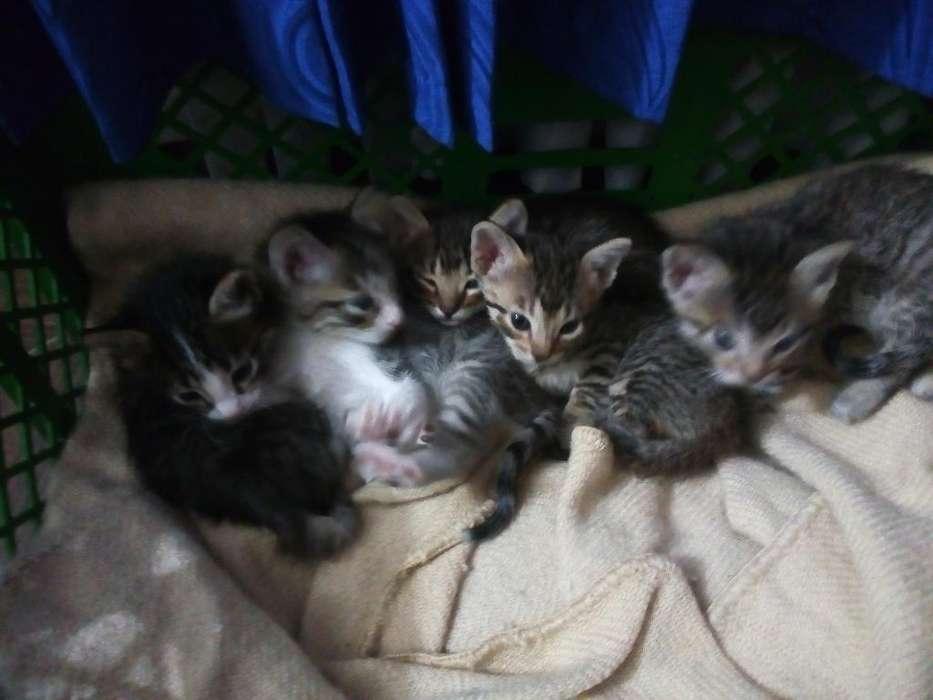 Lindos Gatitos en Adopción