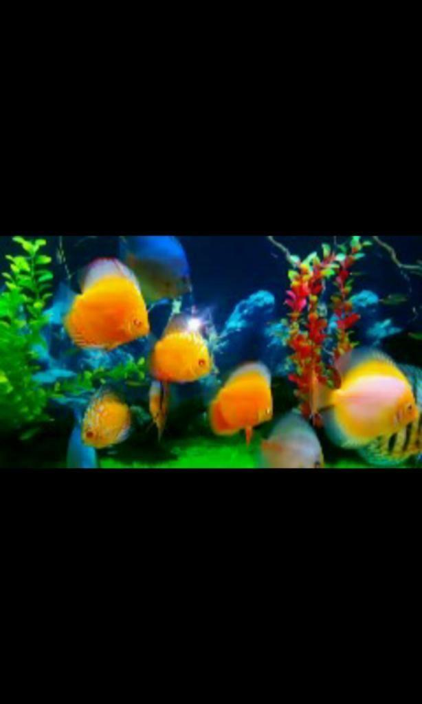 mantenimiento de todo tipo de acuario
