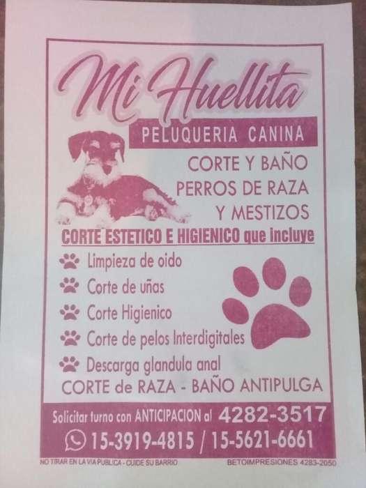 Peluqueria Canina Mi Huellita