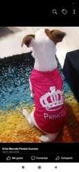 Camisas para Mascota Al por Mayor