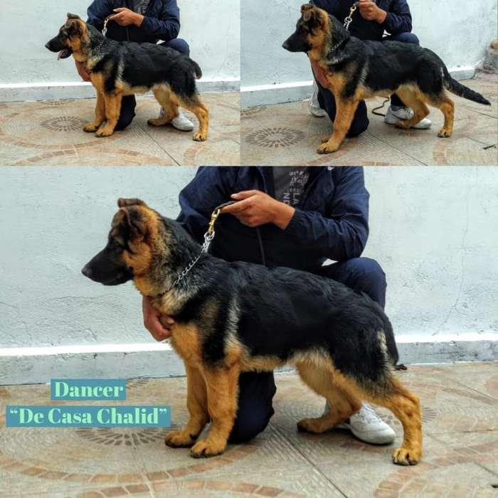 Cachorros con Pedigree
