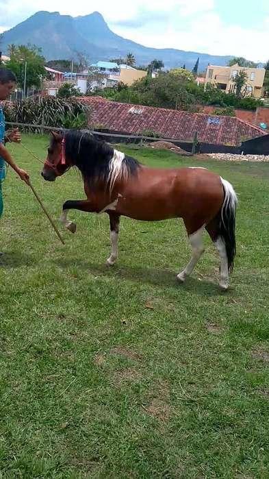 Vendo Pony Domado