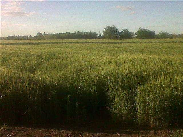 Campo agrícola sin mejoras en Lobos.