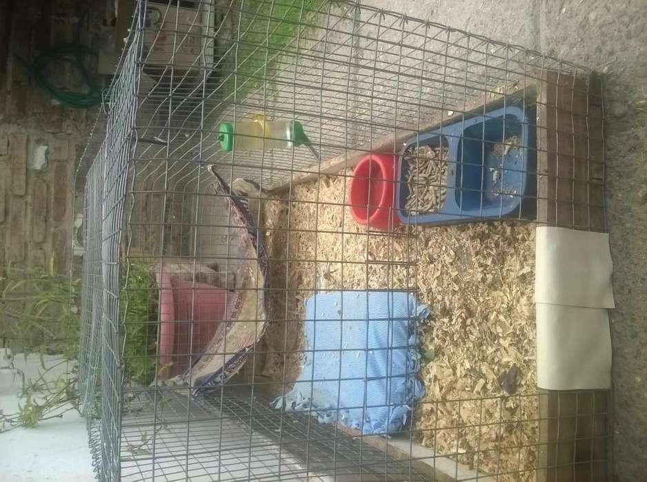Jaula para cobayos o conejos grande
