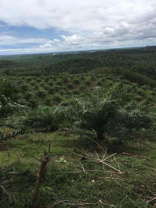 Venta de Terreno de 100 Hectareas Frente a la Via Esmeraldas Borbon