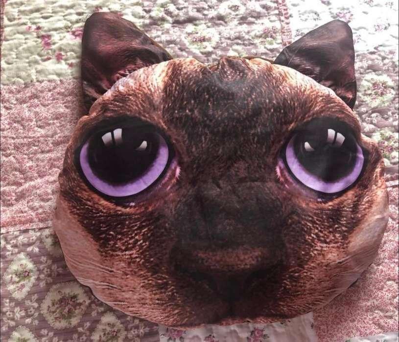 Almohada de Gato