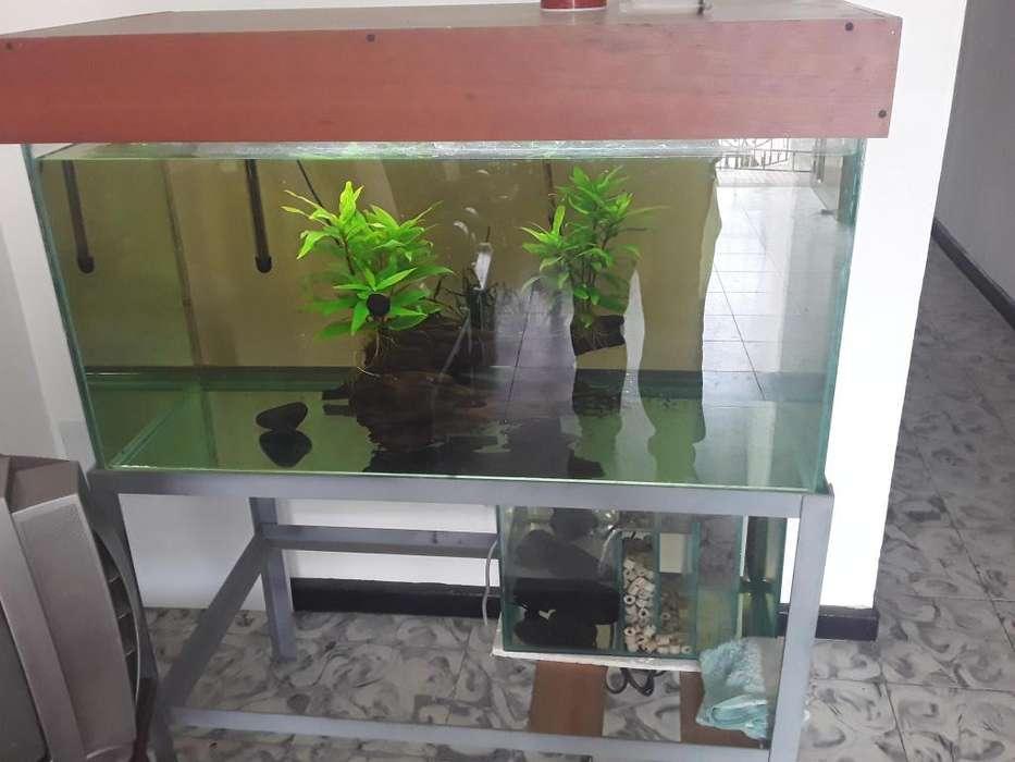 acuario de 250 litros