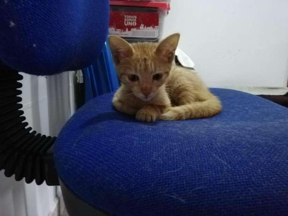 En Adopción Gatica