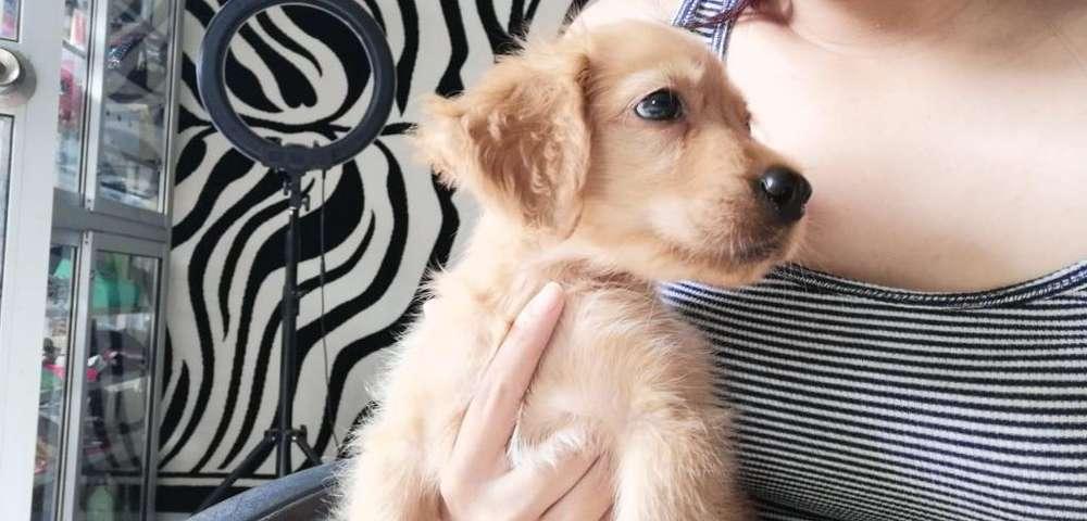 Deseo Adoptar Cachorro Husky O Pastor