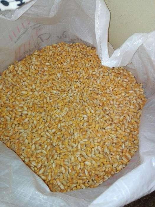 Bolsa de Maiz,50 Kilos 500