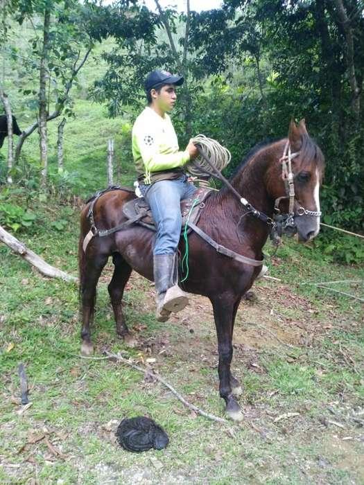 <strong>caballo</strong> Troton Manso