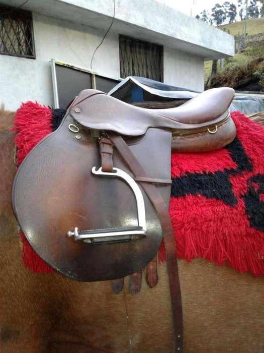 Vendo dos caballos de Vaqueria y Galpago