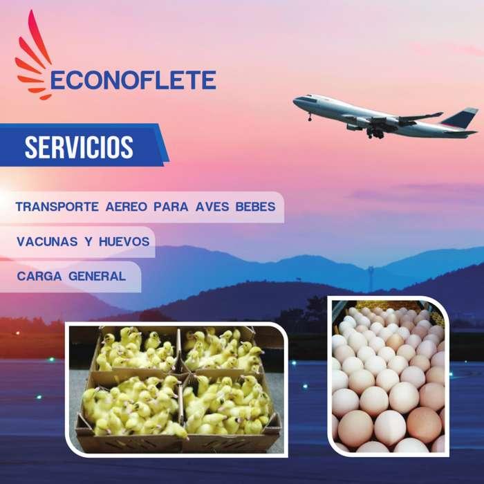 Transporte aereo de pollos bb, vacunas y huevos fertiles