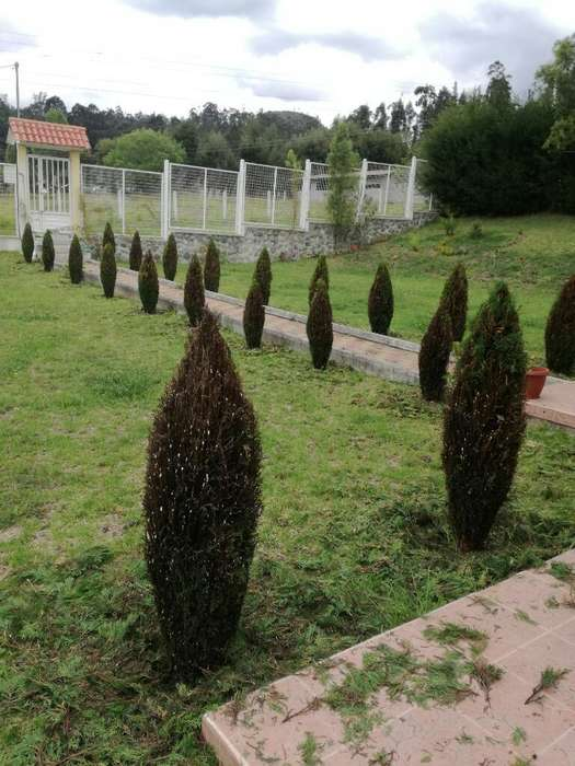 Jardinero y asesoramiento en plantas
