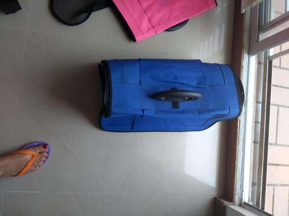 maleta de viaje para perro