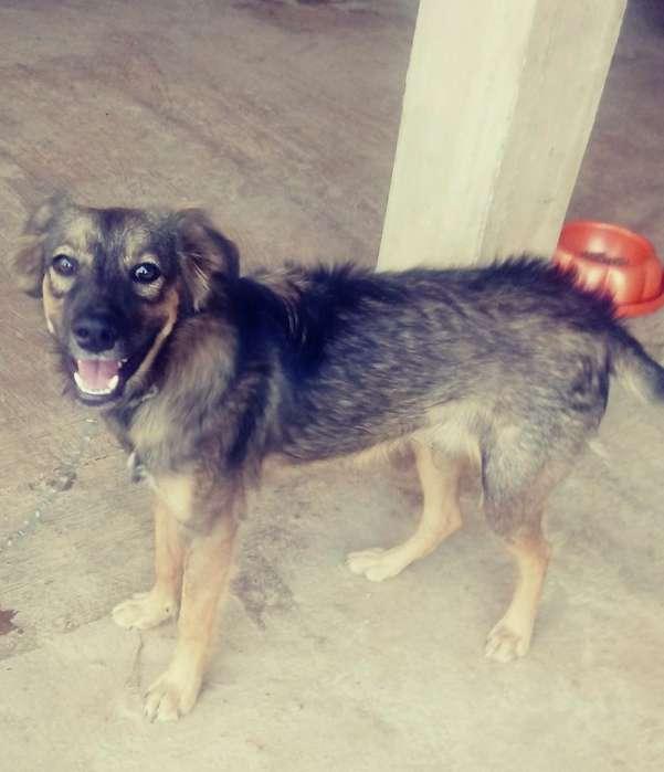 en <strong>adopcion</strong> Perro