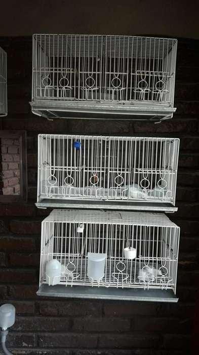Jaulas para Canarios U Otro Tipo de Aves