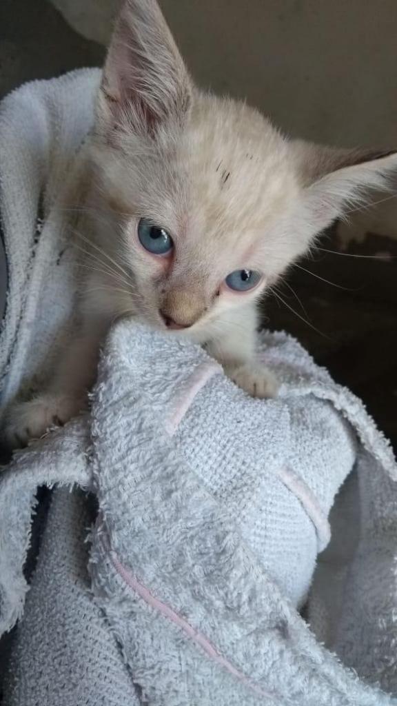 gatica de 1 mes y medio en adopción