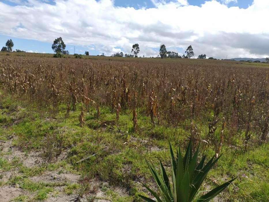 Hectaria de Terreno en Malchigui