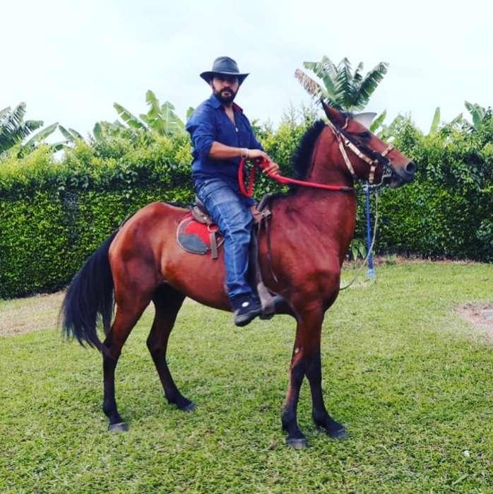<strong>caballo</strong> Joven