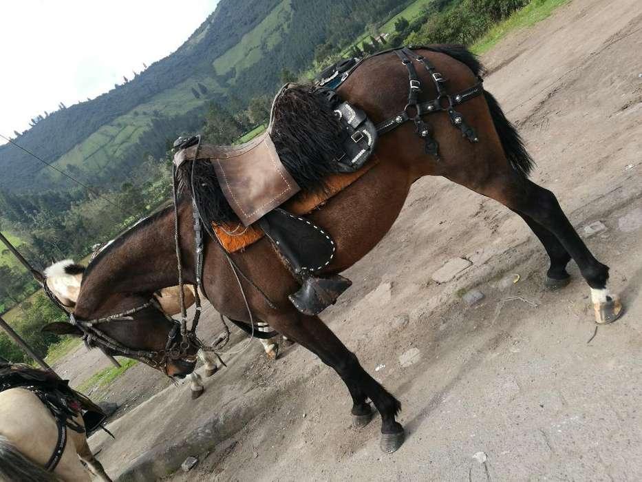 Vendo <strong>caballo</strong> de Vaqueria