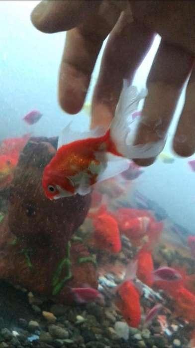 <strong>peces</strong> a Domicilio