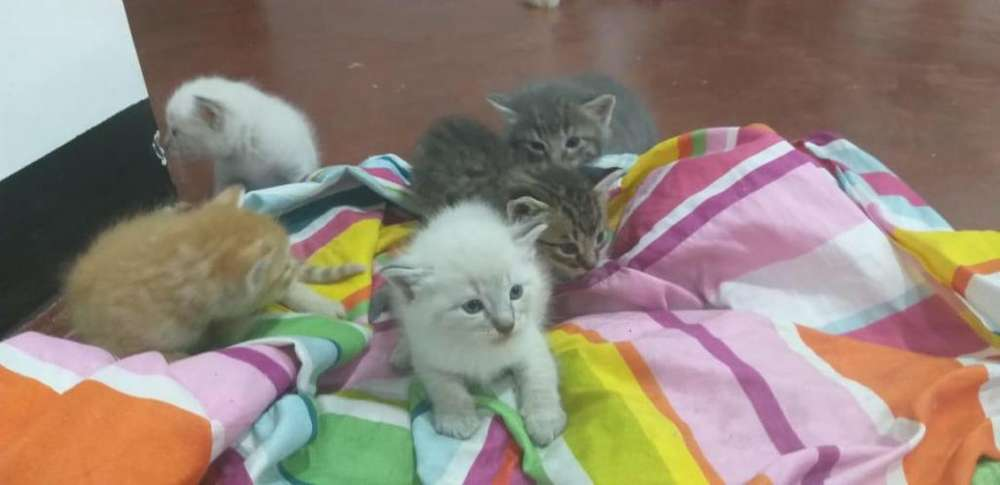 Adopcin gatitos Interesados Llamar al 3214936828