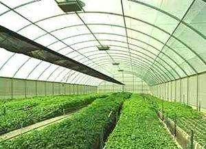 Venta de Plastico para Invernadero